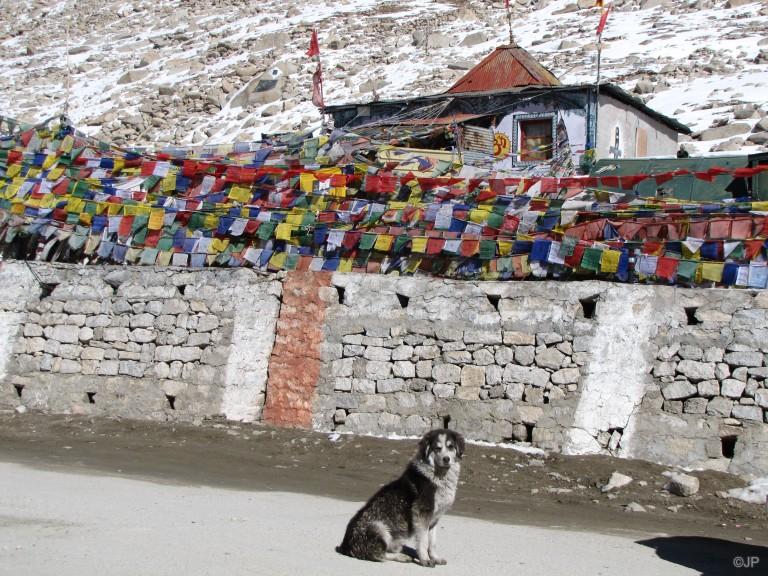 Dog at Chang La